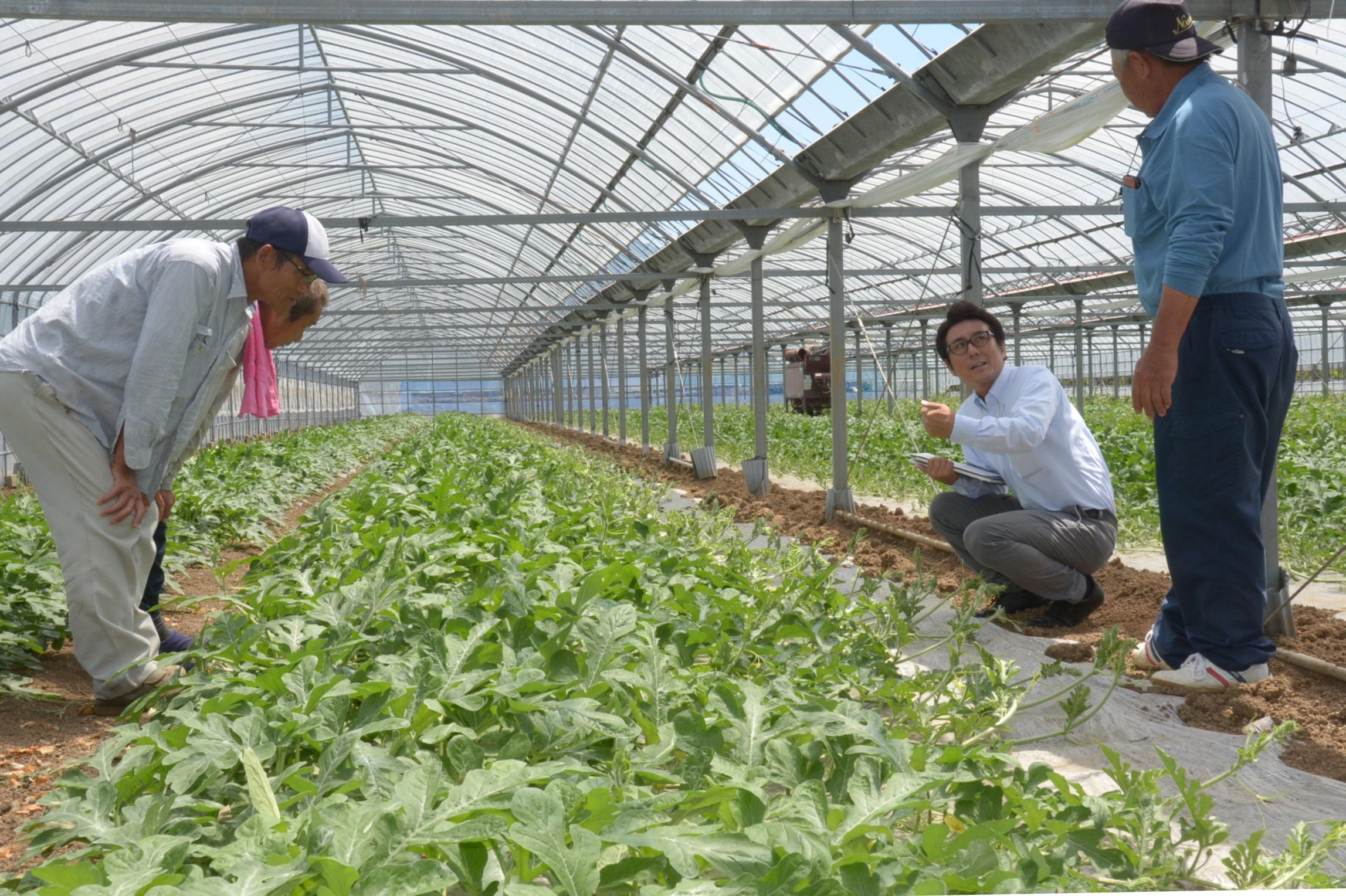 生育状況を確認する農家と種苗会社