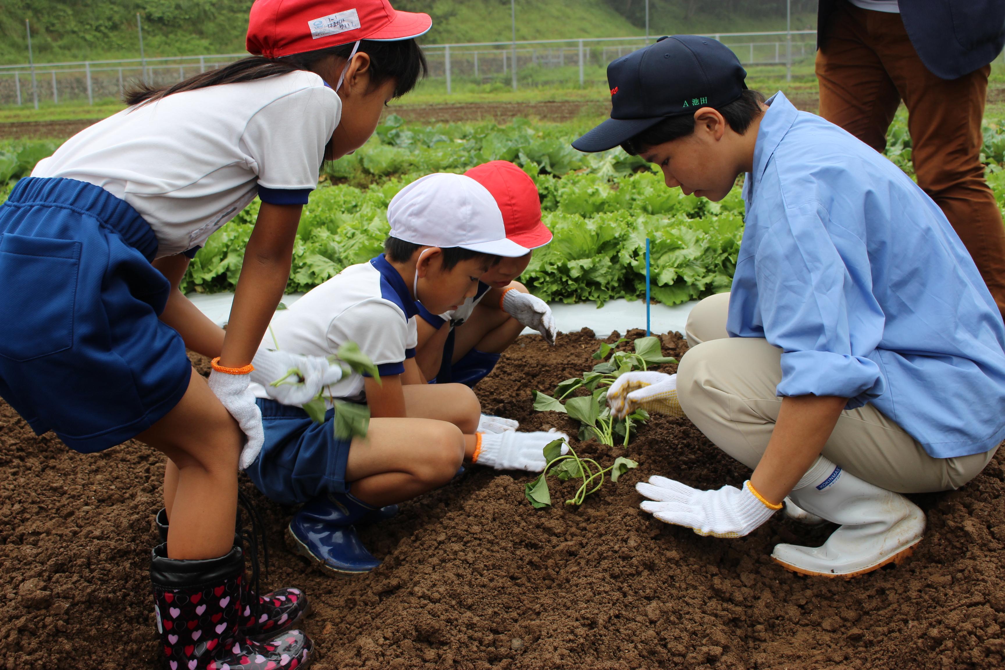 児童へ苗植えの説明を行う農高生